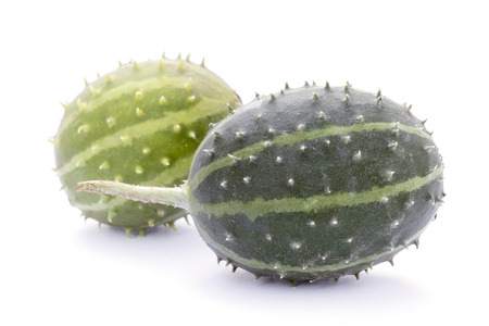 Cucumis  prophetarum canoxii,  wild spiny cucumber, exotic ornamental vegetable
