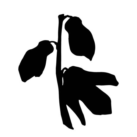 WebBlack silhouette of spring flower. Scilla flower. Flowers for decoration. Vector illustration isolated on white background. Web site page and mobile app design