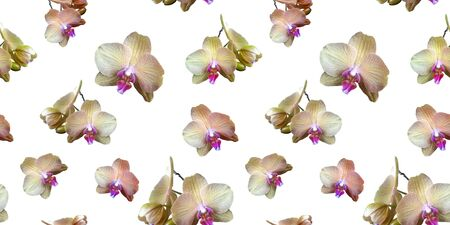 Delicate cream-colored orchid flowers with a pink middle on white background. Isolated flowers. Seamless floral pattern for fabric, textile, wrapping paper. Tropical flower