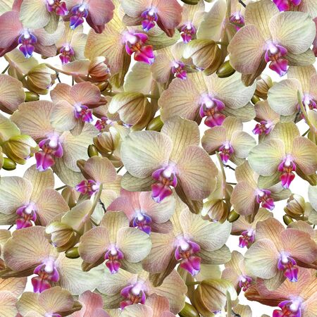 Delicate cream-colored orchid flowers with a pink middle background. Seamless floral pattern for fabric, textile, wrapping paper. Tropical flowers