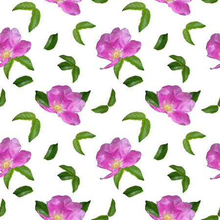 Pattern with Rosehip flower with raindrops and green leaves on a white background. Seamless floral pattern for fabric, textile, wrapping paper. bright pink flower