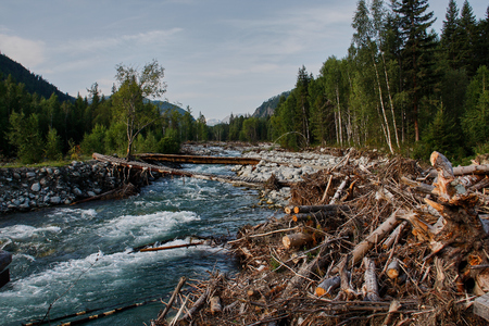 The mountain river after a flood. The trees uprooted Reklamní fotografie