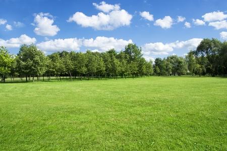 Paesaggio estivo di erba e alberi