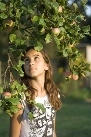 Girl looking at apple branches