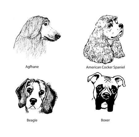 Dog portraits Illustration