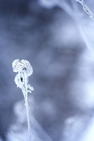 Ramo congelato