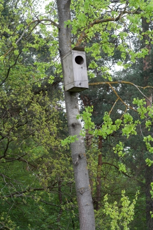 Scatola di nidificazione