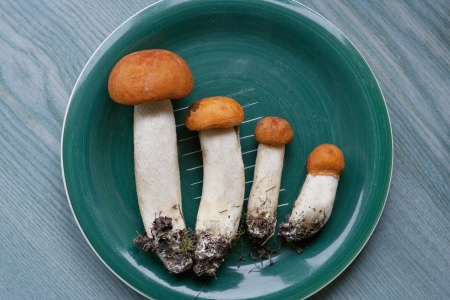 Mushrooms on plate, view from above