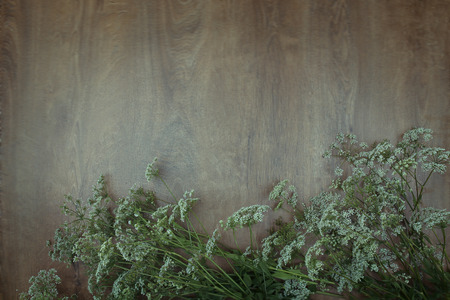 milfoil: Wildflowers on wooden background.  Bouquets of yarrows on wooden surface. Achillea.  Place for text. Stock Photo