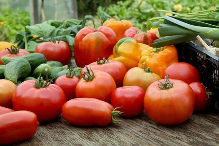 pimientos: Recién cosechado verduras. Los tomates, pepinos, pimientos, puerros, ajos, espinacas en la mesa