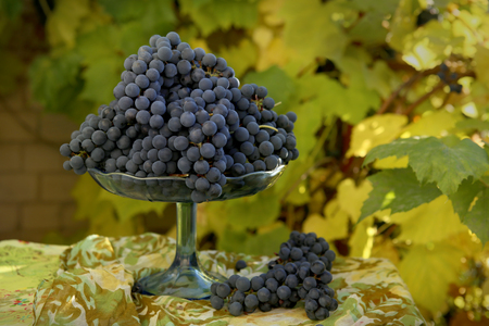 Fruit stand with grapes. Grapes  photographed against the background of the vine in autumn harvest time.
