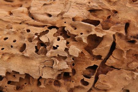 Fondo de madera Belleza natural. Las hormigas carpinteras excavaron galerías de madera. Foto de archivo - 69713659