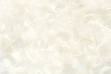 Abstract feathers background.  White feathers pattern texture.