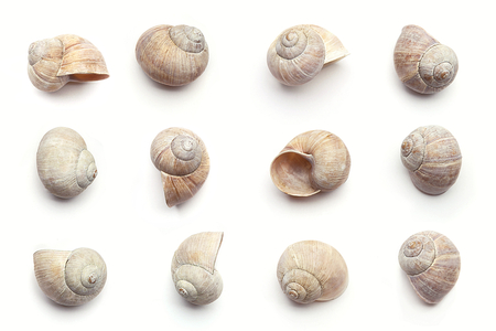 Set of empty snail shells isolated on white background. Concept with dry snail shells.