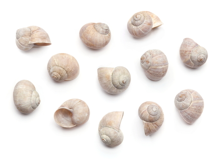 Composition of empty shells isolated on white background. Concept with dry snail shells.