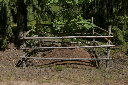 Fenced anthill in forest. Anthill in the protected area in wood.