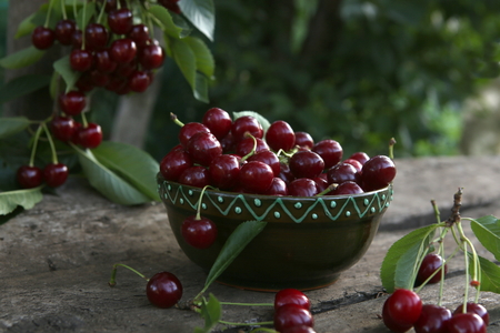 Freshly picked cherries in a bowl on a wooden table in a garden. Fresh ripe cherries harvested in a bowl and cherry tree branch with berries in a summer garden.