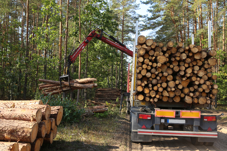 Timber harvesting and transportation in forest. Transport of forest logging industry, forestry industry. Stock fotó