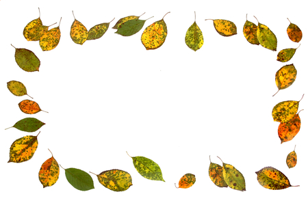 Autumn leaves isolated on white background. Colorful cherry tree leaves as a frame or border.