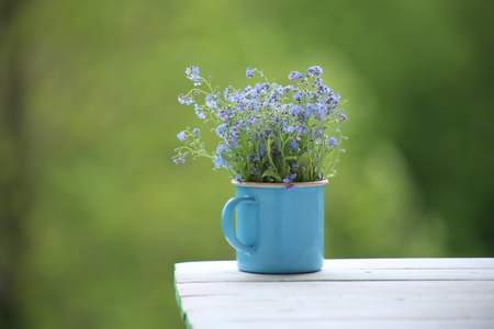Wild blue flowers in cup.  Myosotis are called forget-me-not or scorpion grasses. Stock Photo