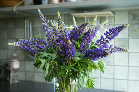 Blue lupines bouquet in vase in kitchen. Blooming wild flowers lupine.