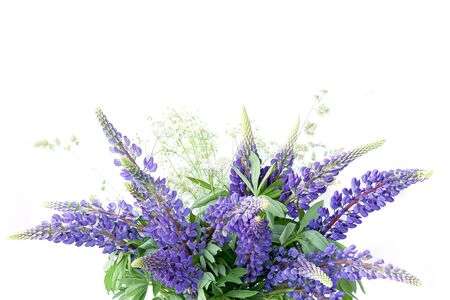 Blue lupines bouquet isolated on white background. Meadow natural wildflowers bouquet.