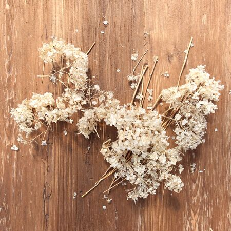 Dry Hydrangea blossoms on wood table with copy space. White dry flowers on wooden background.