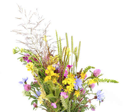 Bouquet of flowering wild grass and herbs isolated on white background. Meadow flowers wildflowers and plants.