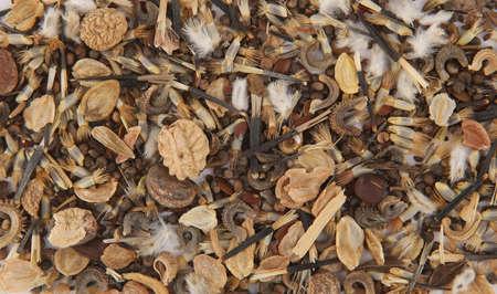 Macro background of various flowers seeds.  Texture of dry flowers seeds, top view. 版權商用圖片