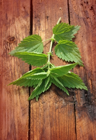 Freshly stinging nettle on a wooden background  photo