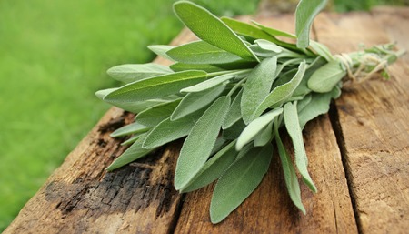 fresh sage bunch on wooden table