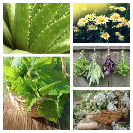 Collage of herbs photo