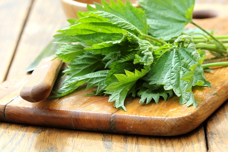 stinging  nettle: stinging nettle on a cutting board