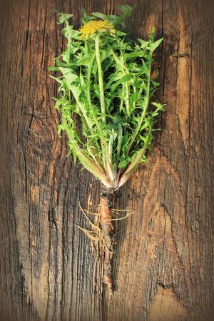 raices de plantas: planta de diente de león con hojas comestibles y raíces sobre fondo de madera