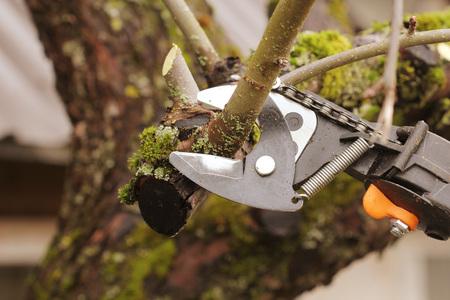 tuinman snoeien oude boom met snoeischaar