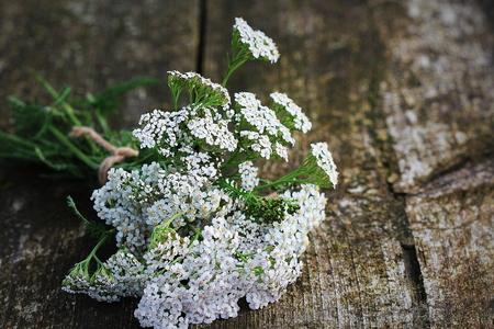 White Yarrow or Achillea millefolium, Native Wildflower on wooden background Stock Photo