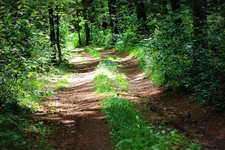 Path With Green Trees in Forest. Beautiful Alley, road In Park. Way Through Summer Forest. Stock Photo