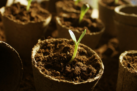 Young fresh seedling growing in pots