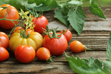 Fresh colorful ripe tomatoes on wooden board. Colorful tomato - red,yellow , orange. Harvest vegetable cooking conception.. Tomatoes with leaves background.