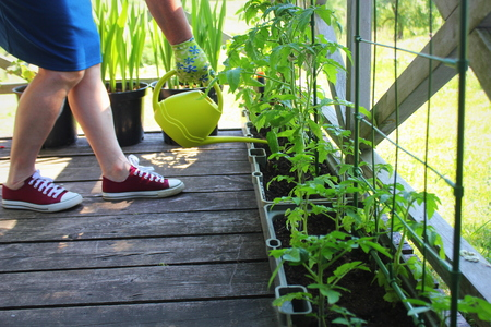 Women gardener watering plants. Container vegetables gardening. Vegetable garden on a terrace. Flower, tomatoes growing in container