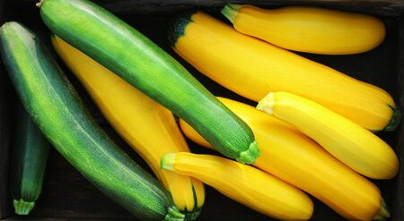 Harvesting zucchini. Fresh squash lying in box. Fresh squash picked from the garden. Organic food concept