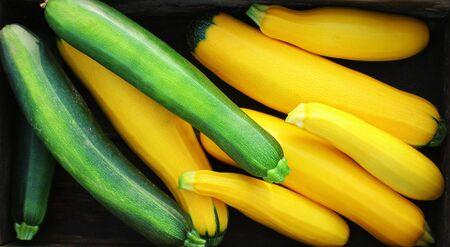 Zucchini ernten. Frischer Kürbis, der im Kasten liegt. Frischer Kürbis aus dem Garten gepflückt. Bio-Lebensmittelkonzept Standard-Bild