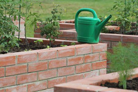 Raised bed gardening.Vegetables growing in garden . Standard-Bild