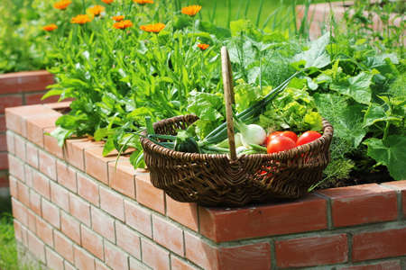 Raised beds gardening in an urban garden growing plants herbs spices berries and vegetables. Standard-Bild
