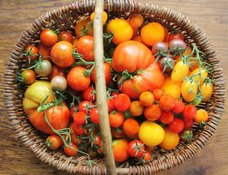 Fresh colorful ripe tomatoes in basket. Colorful tomato - red,yellow , orange. Harvest vegetable cooking conception. Top view.