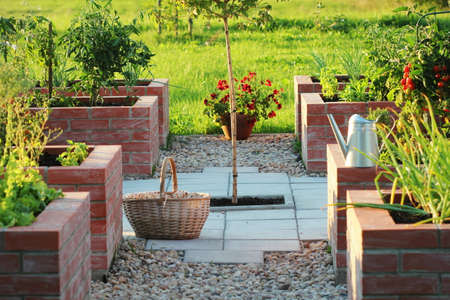 A modern vegetable garden with raised briks beds . .Raised beds gardening in an urban garden growing plants herbs spices berries and vegetables .