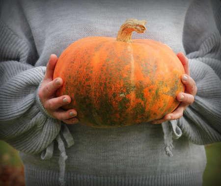 Woman holds big pumpkin in her hands, halloween theme, autumn harvest, woman's hands . Banco de Imagens
