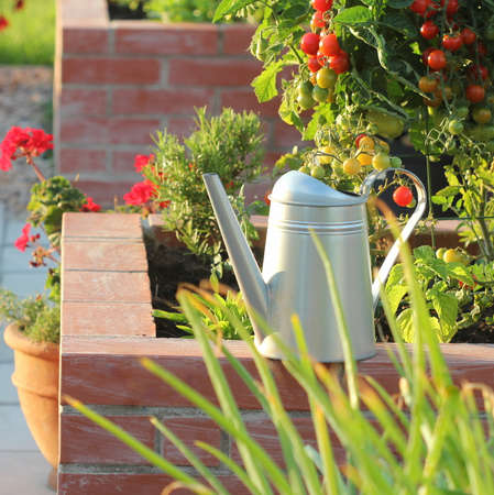 A modern vegetable garden with raised briks beds . .Raised beds gardening in an urban garden growing plants herbs spices berries and vegetables Standard-Bild