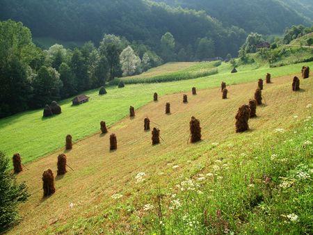 mountin: Hay field