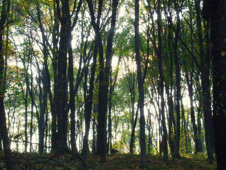 glen: forest glen Stock Photo